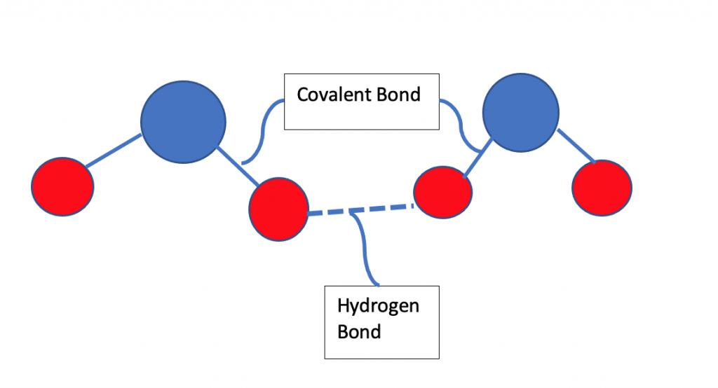 Intermolecular forces, Hydrogen bonding, Covalent bonding, Water